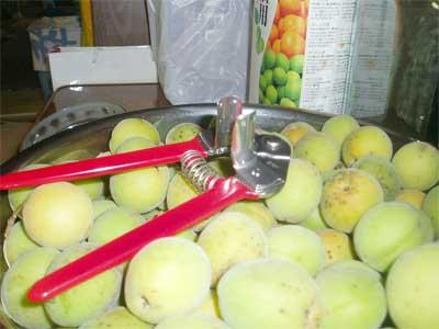 ぶんごう梅