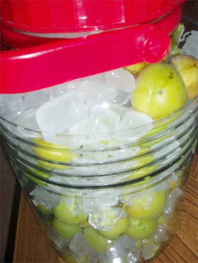 ぶんごう梅のシロップ漬け
